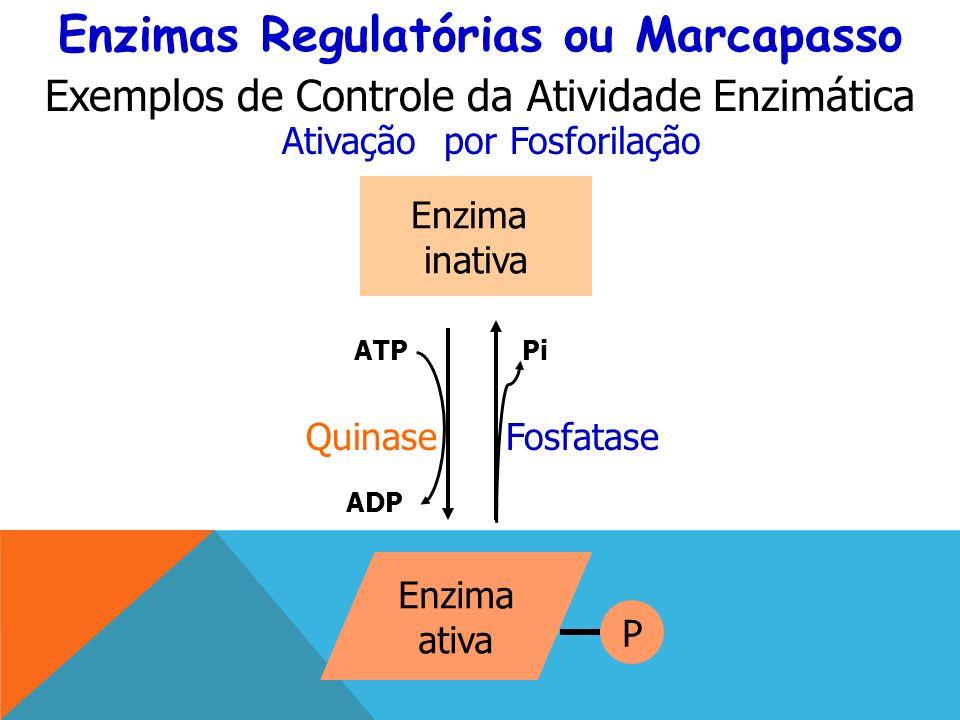 Enzima inativa Enzima ativa Quinase ATP ADP Pi Fosfatase P Enzimas Regulatórias ou Marcapasso Ativação por Fosforilação Exemplos de Controle da Atividade Enzimática