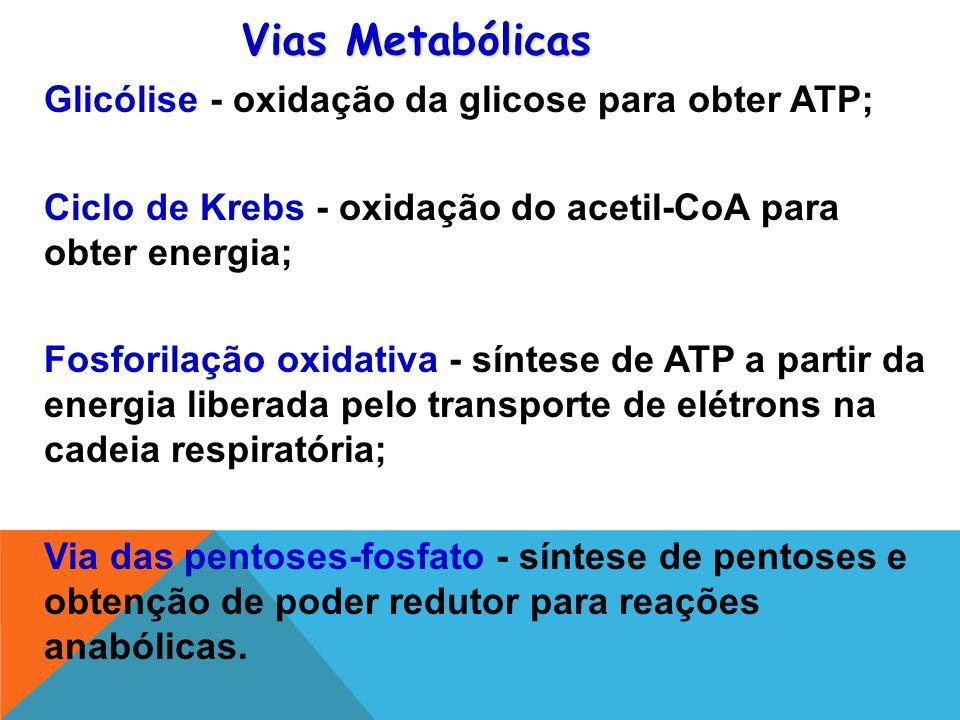 Glicólise - oxidação da glicose para obter ATP; Ciclo de Krebs - oxidação do acetil-CoA para obter energia; Fosforilação oxidativa - síntese de ATP a partir da energia liberada pelo transporte de elétrons na cadeia respiratória; Via das pentoses-fosfato - síntese de pentoses e obtenção de poder redutor para reações anabólicas.