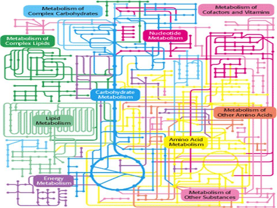 ORGANIZAÇÃO EM VIAS METABÓLICAS As vias consistem numa seqüência de passos catalisados por enzimas; Enzimas podem encontra-se separadas ou formar complexos multienzimáticos ou formar sistemas associados a membranas.