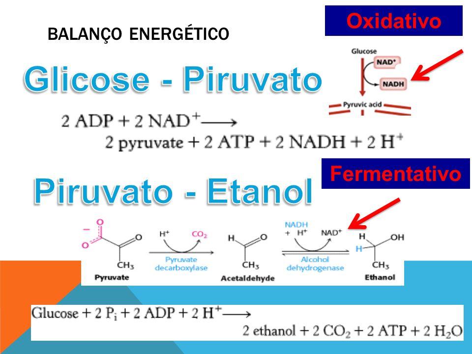 BALANÇO ENERGÉTICO Oxidativo Fermentativo