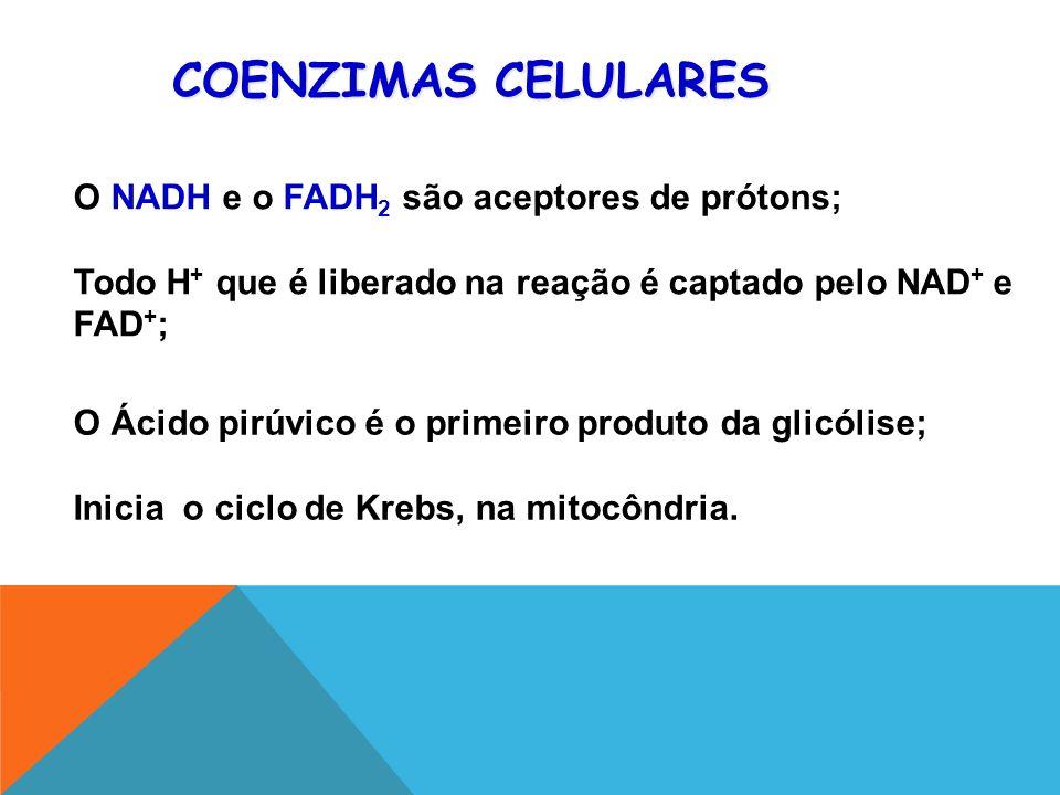 O Ácido pirúvico é o primeiro produto da glicólise; Inicia o ciclo de Krebs, na mitocôndria.