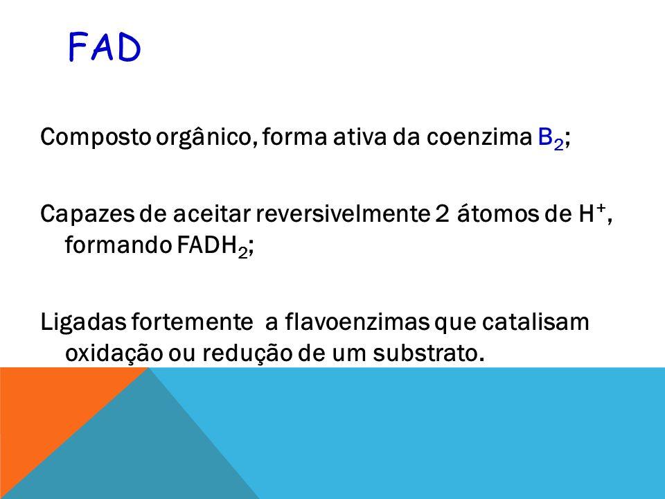 FAD Composto orgânico, forma ativa da coenzima B 2 ; Capazes de aceitar reversivelmente 2 átomos de H +, formando FADH 2 ; Ligadas fortemente a flavoenzimas que catalisam oxidação ou redução de um substrato.