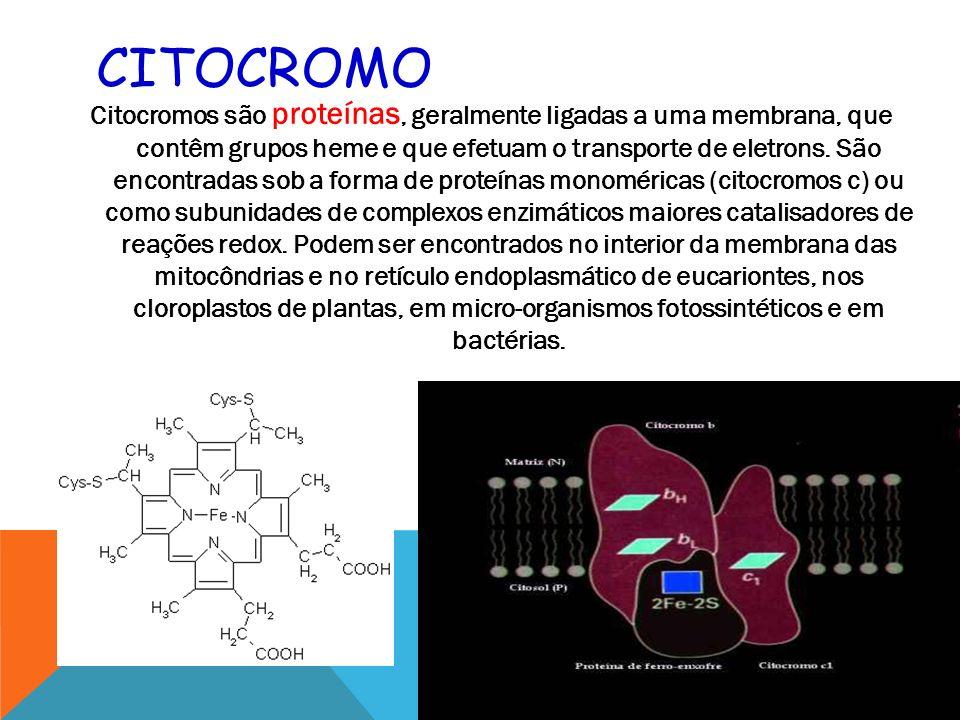 CITOCROMO Citocromos são proteínas, geralmente ligadas a uma membrana, que contêm grupos heme e que efetuam o transporte de eletrons.