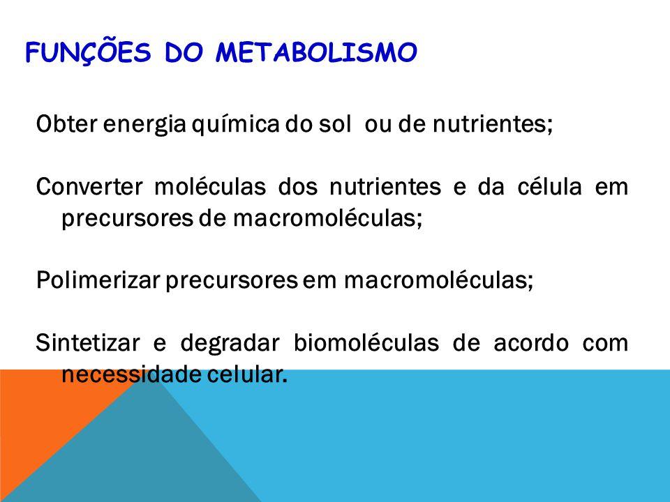 O ATP moeda de troca energética nas células; Organismos fototrópicos transformam energia luminosa em energia química sob forma de ATP; Heterotróficos transformam alimentos em ATP; Ciclo do ATP transporta energia da fotossintese ou catabolismo para processos celulares que necessitam de energia.