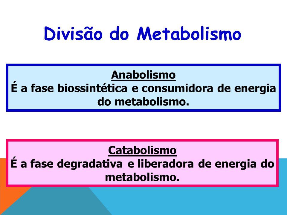 Divisão do Metabolismo Anabolismo É a fase biossintética e consumidora de energia do metabolismo.