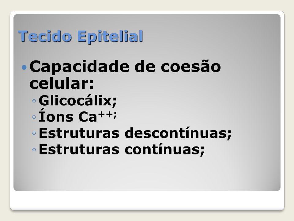 Tecido Epitelial Capacidade de coesão celular: Glicocálix; Íons Ca ++; Estruturas descontínuas; Estruturas contínuas;