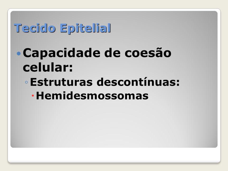Tecido Epitelial Capacidade de coesão celular: Estruturas descontínuas: Hemidesmossomas