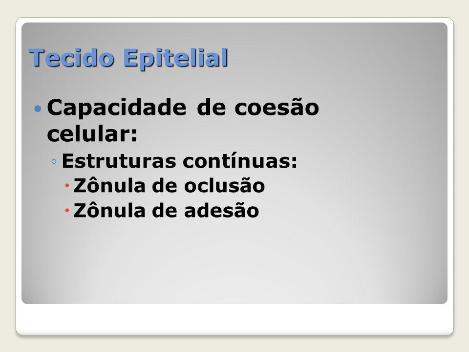Tecido Epitelial Capacidade de coesão celular: Estruturas contínuas: Zônula de oclusão Zônula de adesão