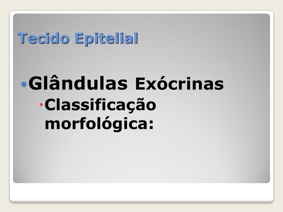Tecido Epitelial Glândulas Exócrinas Classificação morfológica: