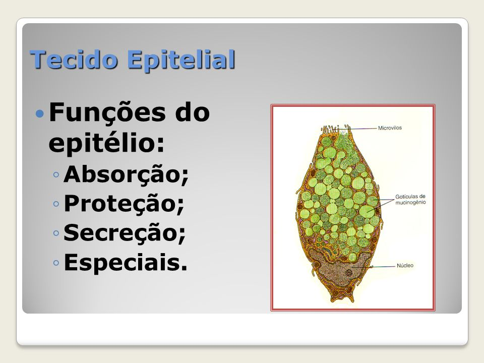 Tecido Epitelial Funções do epitélio: Absorção; Proteção; Secreção; Especiais.