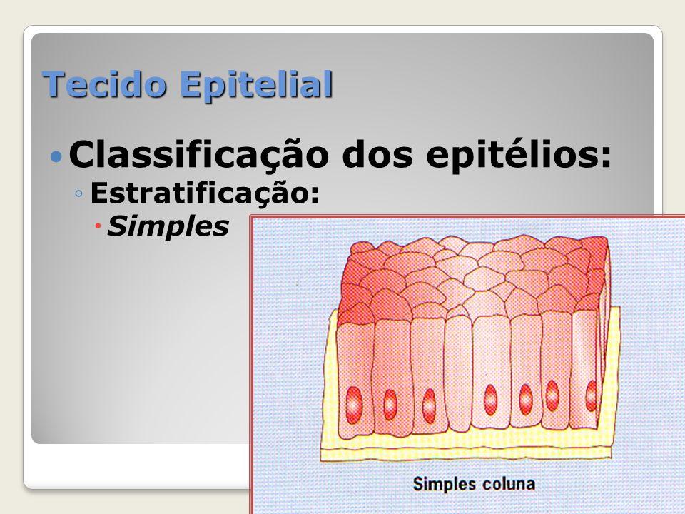 Tecido Epitelial Classificação dos epitélios: Estratificação: Simples