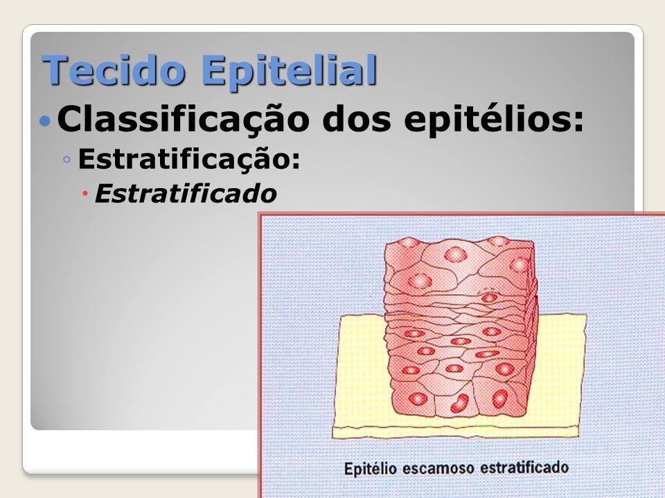 Tecido Epitelial Classificação dos epitélios: Estratificação: Pseudo-estratificado