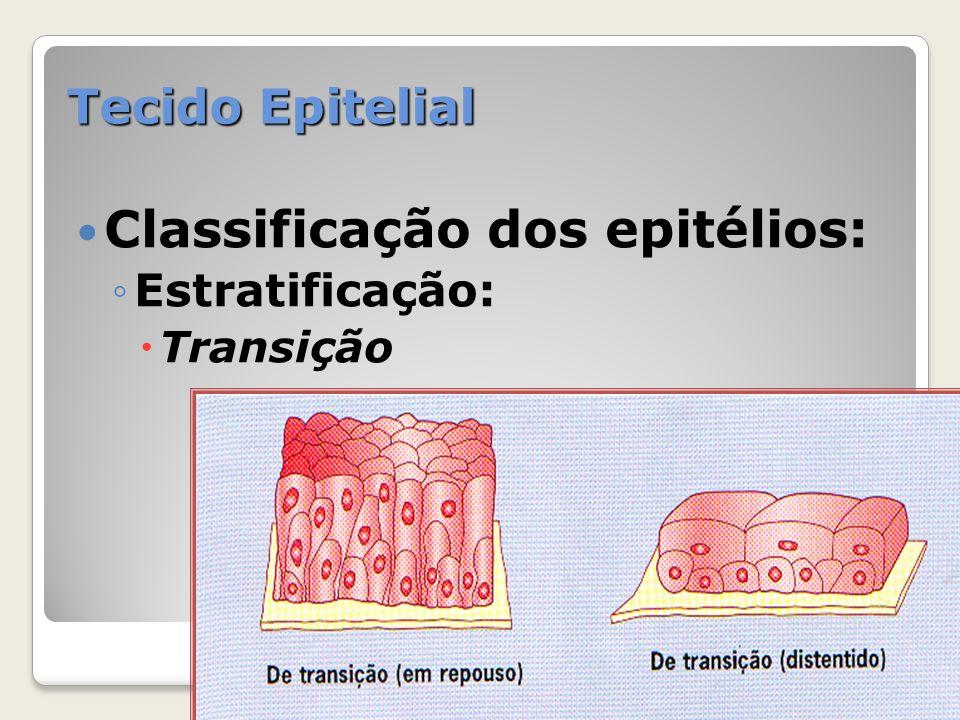 Tecido Epitelial Classificação dos epitélios: Estratificação: Transição