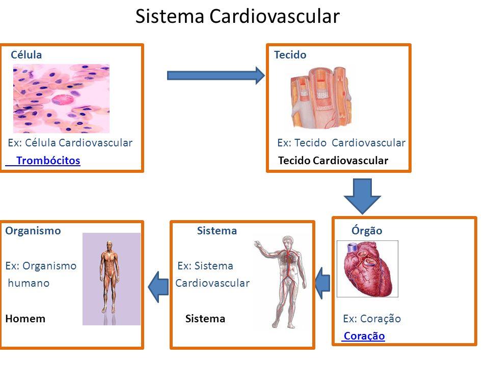 Sistema Cardiovascular Célula Tecido Ex: Célula Cardiovascular Ex: Tecido Cardiovascular Trombócitos Trombócitos Tecido Cardiovascular Organismo Siste