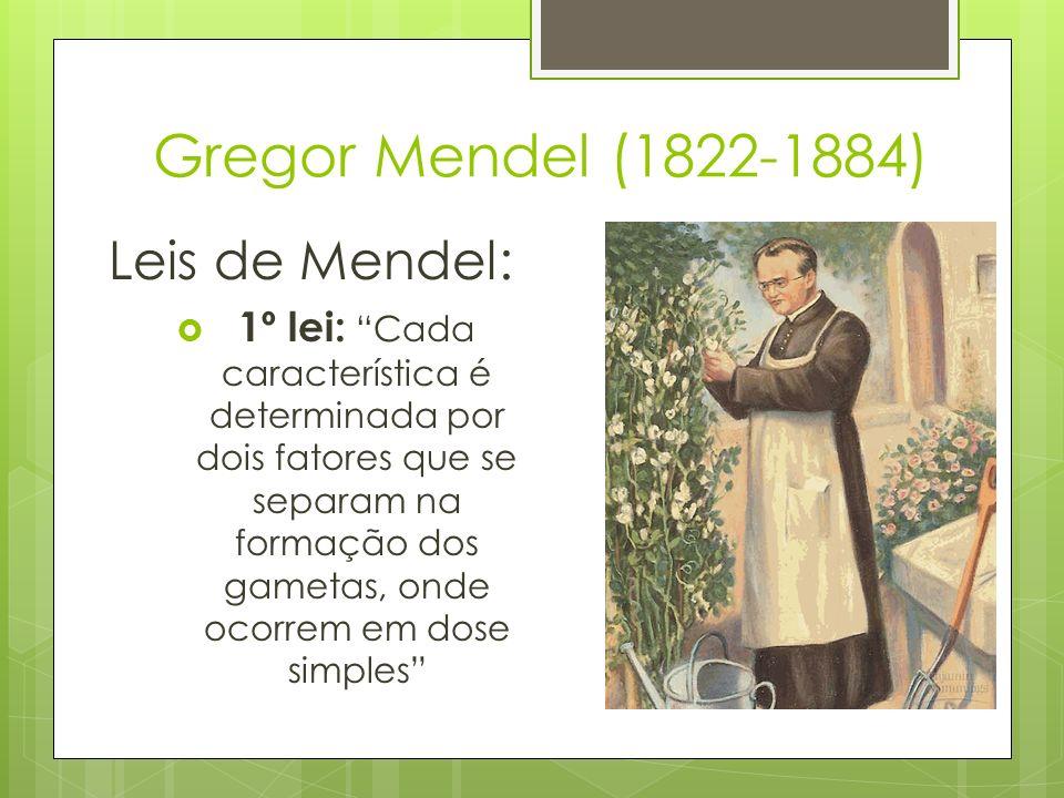 Gregor Mendel (1822-1884) Leis de Mendel: 1º lei: Cada característica é determinada por dois fatores que se separam na formação dos gametas, onde ocor