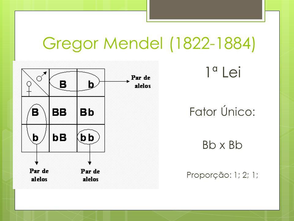 Gregor Mendel (1822-1884) 1ª Lei Fator Único: Bb x Bb Proporção: 1; 2; 1;