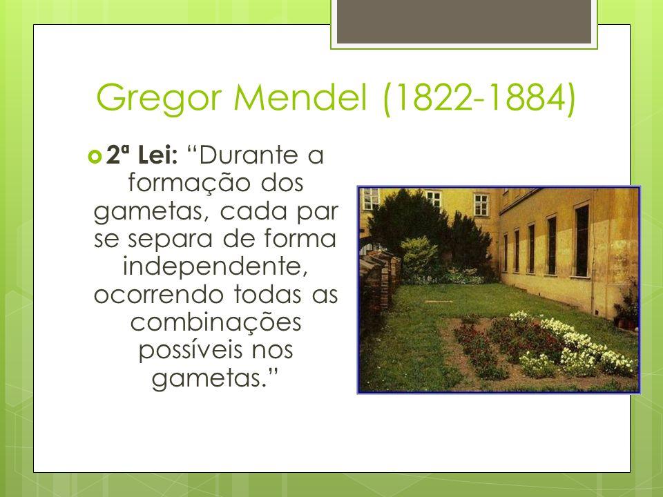 Gregor Mendel (1822-1884) 2ª Lei: Durante a formação dos gametas, cada par se separa de forma independente, ocorrendo todas as combinações possíveis n