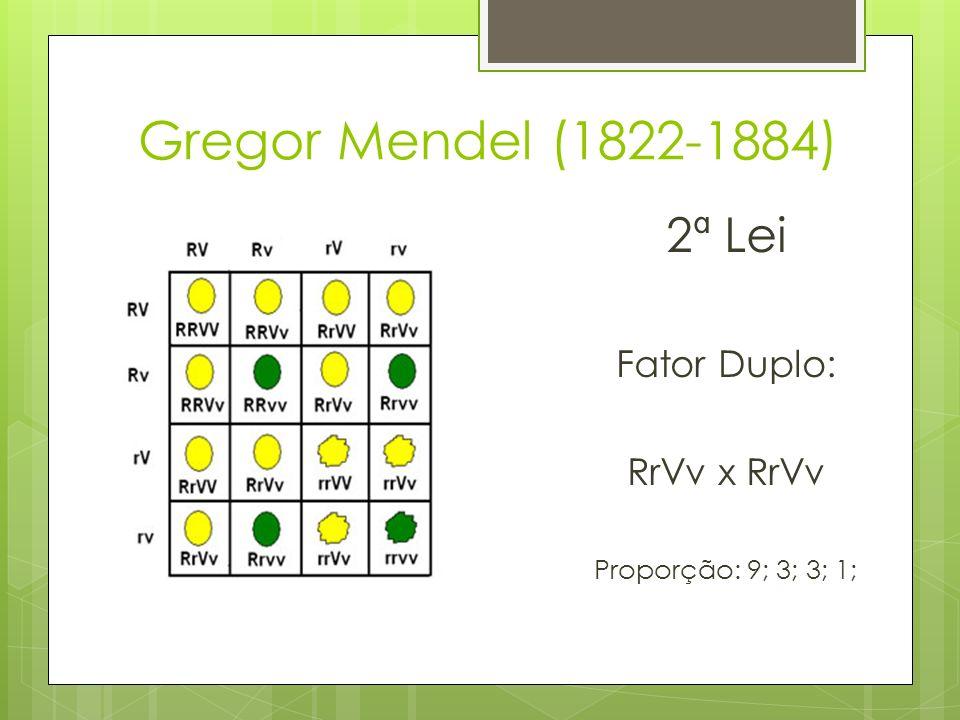 Gregor Mendel (1822-1884) 2ª Lei Fator Duplo: RrVv x RrVv Proporção: 9; 3; 3; 1;