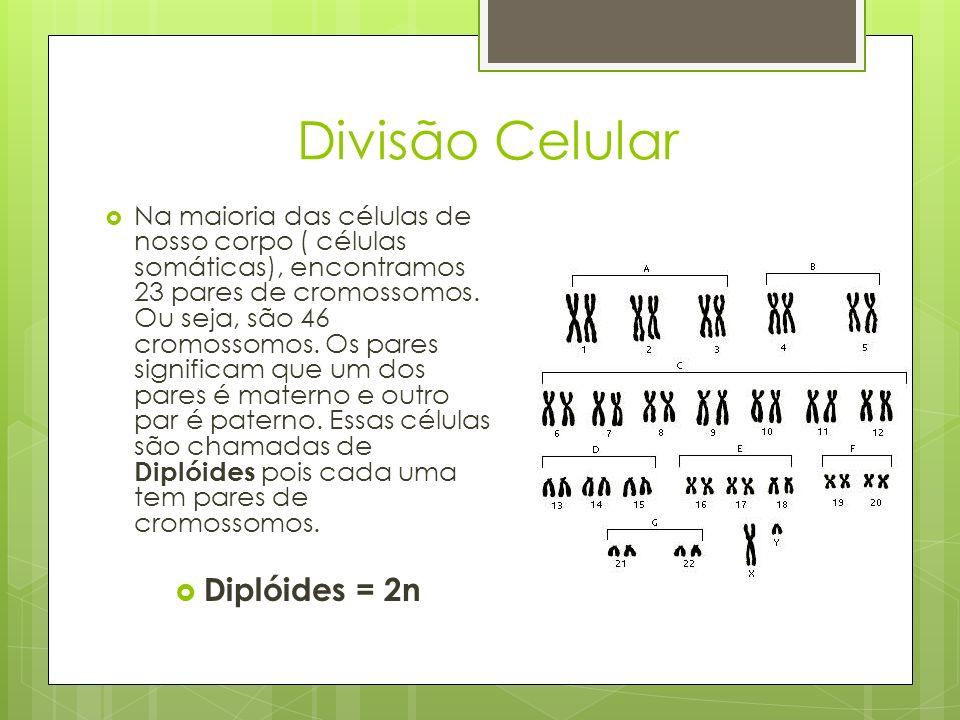 Divisão Celular Na maioria das células de nosso corpo ( células somáticas), encontramos 23 pares de cromossomos. Ou seja, são 46 cromossomos. Os pares