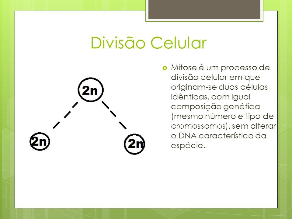 Divisão Celular Mitose é um processo de divisão celular em que originam-se duas células idênticas, com igual composição genética (mesmo número e tipo