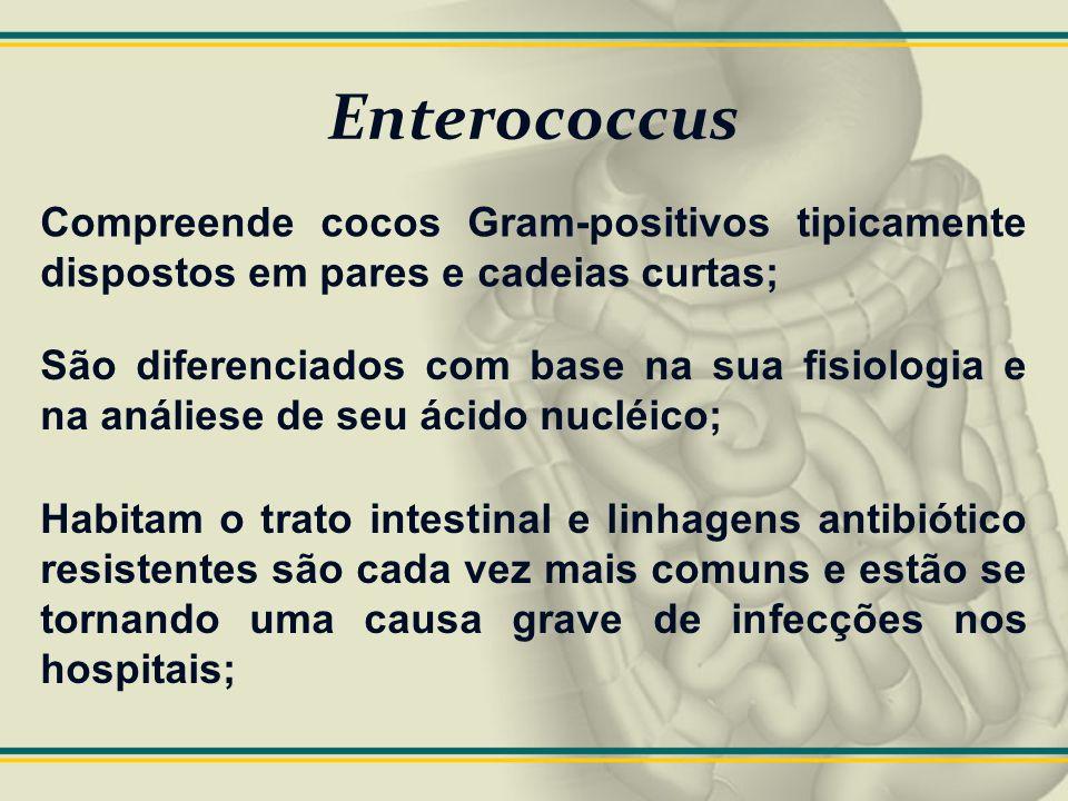 Enterococcus Compreende cocos Gram-positivos tipicamente dispostos em pares e cadeias curtas; São diferenciados com base na sua fisiologia e na análie