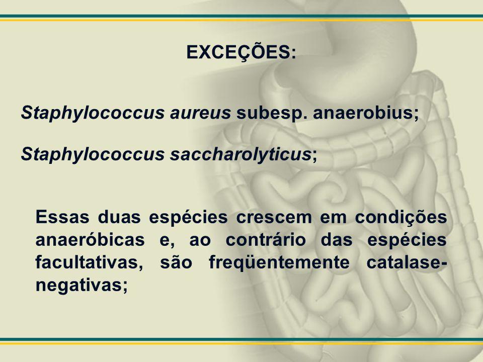 EXCEÇÕES: Staphylococcus aureus subesp. anaerobius; Staphylococcus saccharolyticus; Essas duas espécies crescem em condições anaeróbicas e, ao contrár