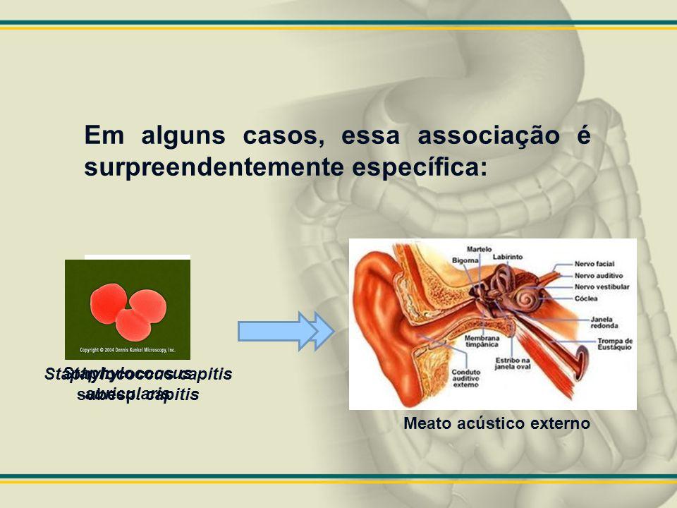 Estreptococos, Enterococos e Bactérias semelhantes a Estreptococo.