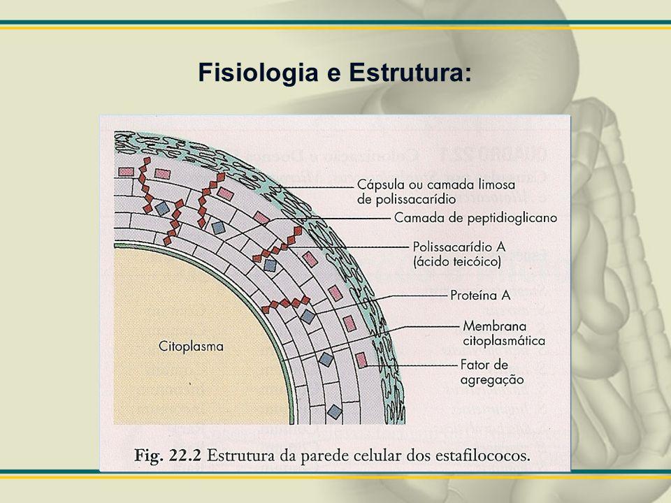 Fisiologia e Estrutura: