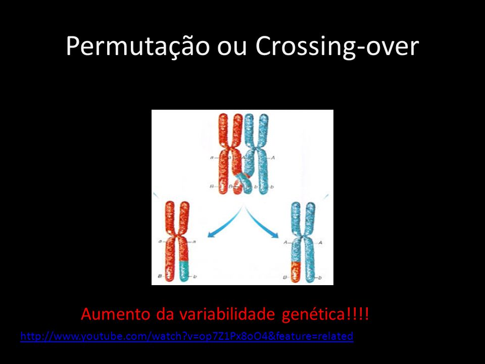 Permutação ou Crossing-over Aumento da variabilidade genética!!!! http://www.youtube.com/watch?v=op7Z1Px8oO4&feature=related