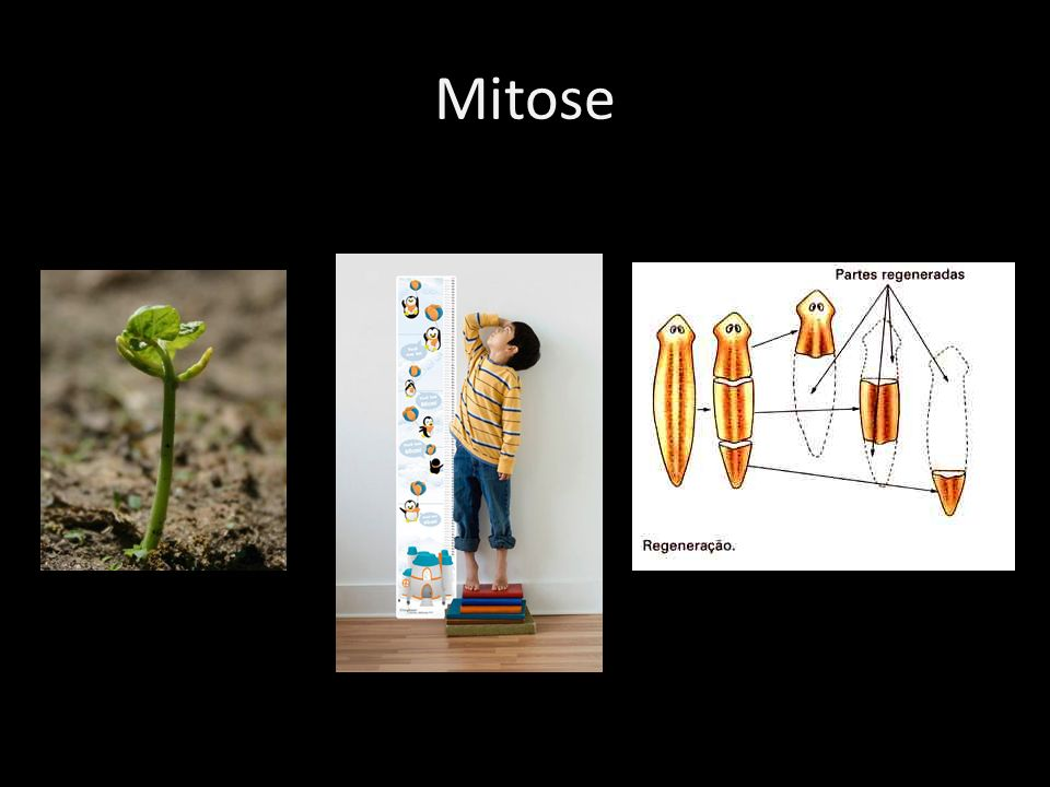 Objetivo da Mitose