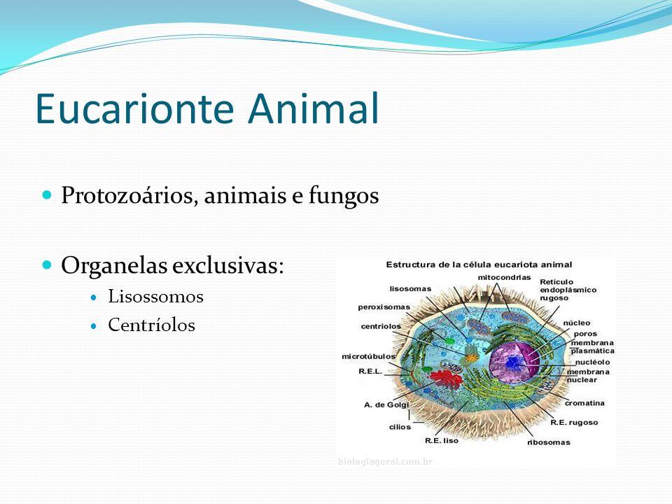 Eucarionte Animal Protozoários, animais e fungos Organelas exclusivas: Lisossomos Centríolos