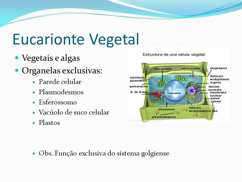 Eucarionte Vegetal Vegetais e algas Organelas exclusivas: Parede celular Plasmodesmos Esferossomo Vacúolo de suco celular Plastos Obs. Função exclusiv