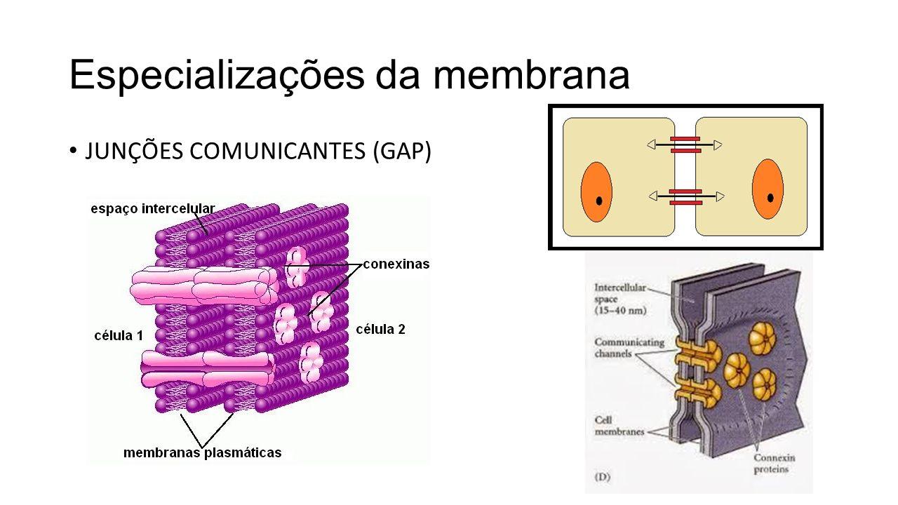 Especializações da membrana PLASMODESMOS