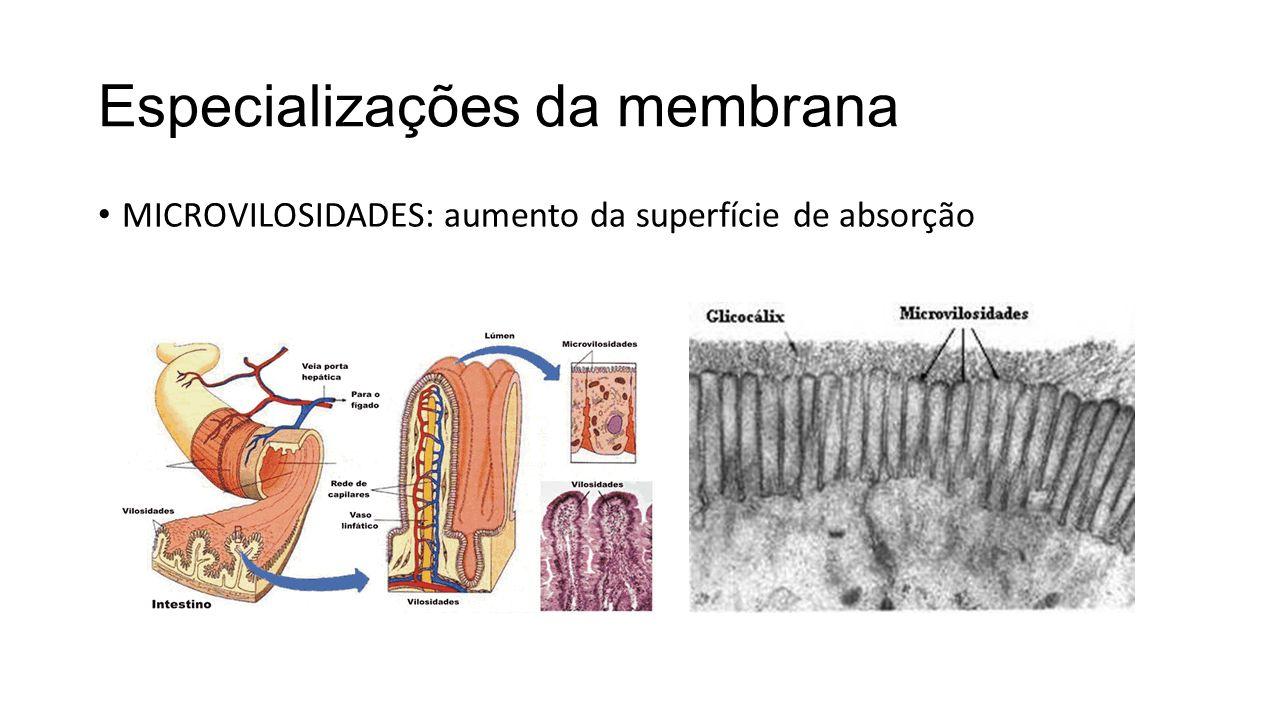 Especializações da membrana MICROVILOSIDADES: aumento da superfície de absorção