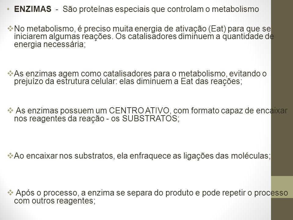 ENZIMAS - São proteínas especiais que controlam o metabolismo No metabolismo, é preciso muita energia de ativação (Eat) para que se iniciarem algumas reações.
