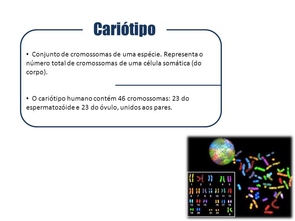 Cariótipo Conjunto de cromossomas de uma espécie. Representa o número total de cromossomas de uma célula somática (do corpo). O cariótipo humano conté