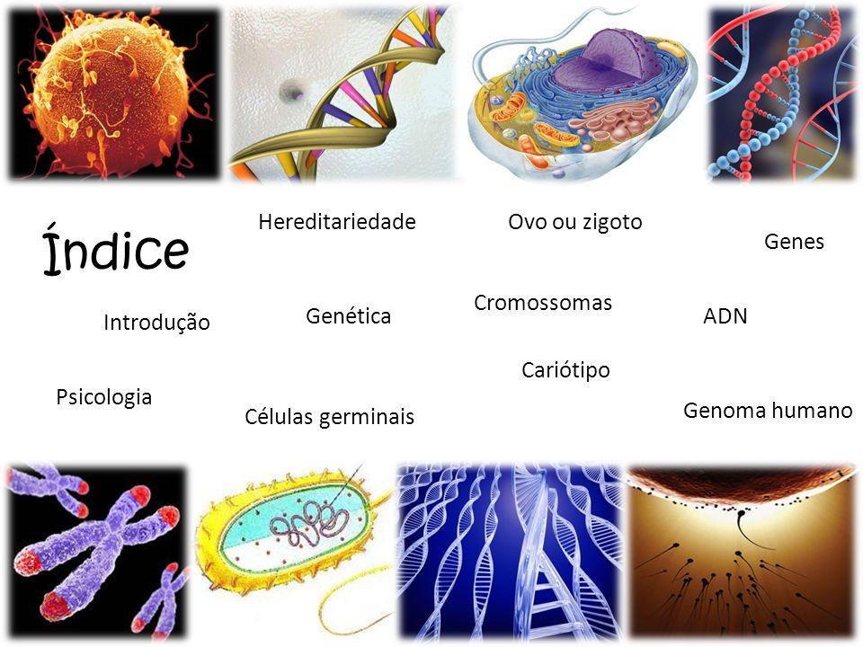 Índice Genes ADN Introdução Psicologia Hereditariedade Genética Células germinais Ovo ou zigoto Cromossomas Cariótipo Genoma humano