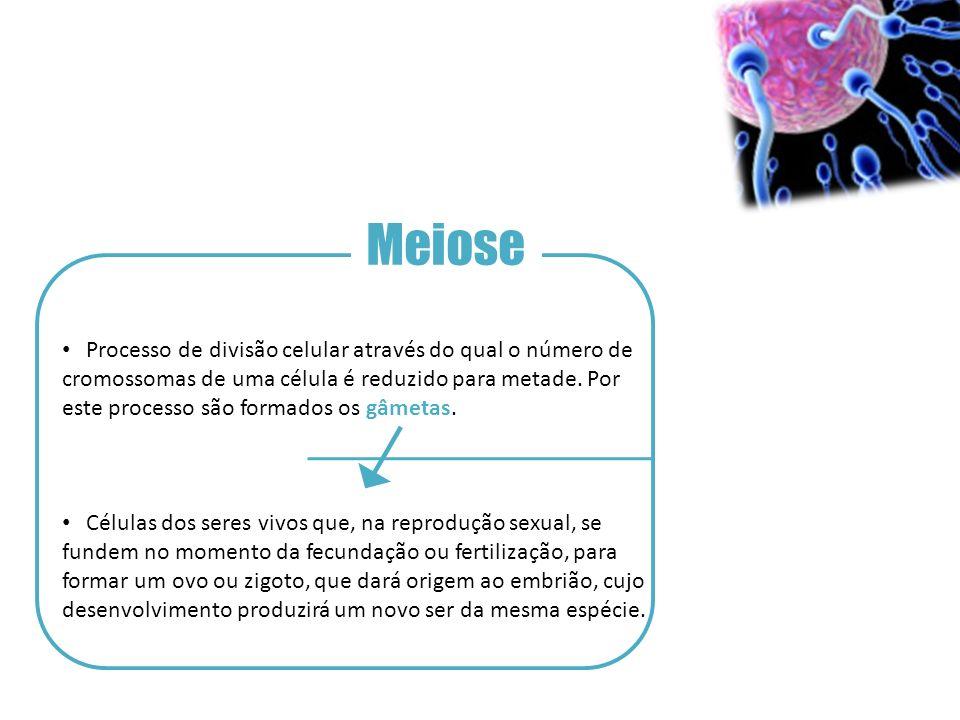 Meiose Processo de divisão celular através do qual o número de cromossomas de uma célula é reduzido para metade.