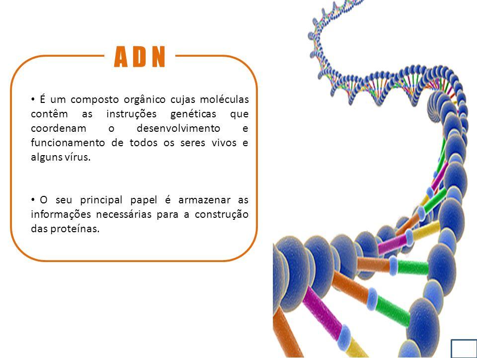 A D N É um composto orgânico cujas moléculas contêm as instruções genéticas que coordenam o desenvolvimento e funcionamento de todos os seres vivos e alguns vírus.