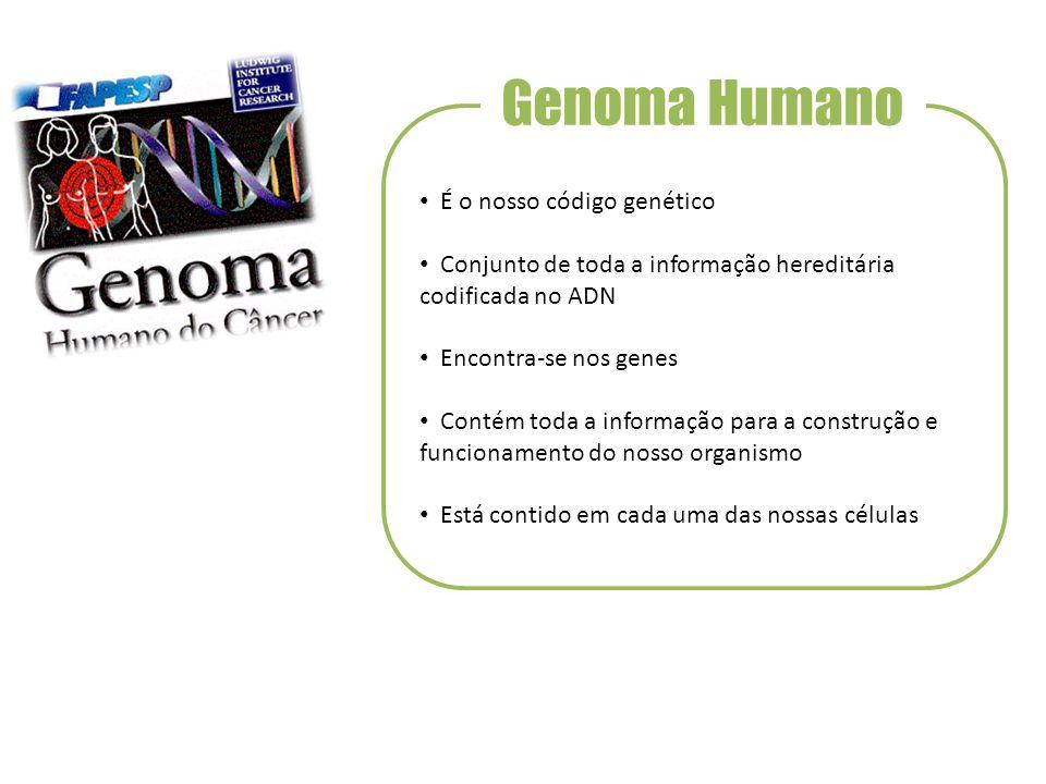 Genoma Humano É o nosso código genético Conjunto de toda a informação hereditária codificada no ADN Encontra-se nos genes Contém toda a informação para a construção e funcionamento do nosso organismo Está contido em cada uma das nossas células
