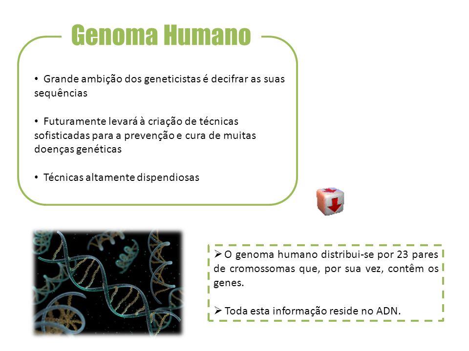Genoma Humano Grande ambição dos geneticistas é decifrar as suas sequências Futuramente levará à criação de técnicas sofisticadas para a prevenção e c