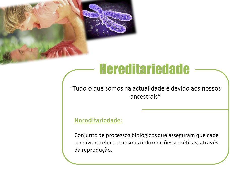 Hereditariedade Tudo o que somos na actualidade é devido aos nossos ancestrais Hereditariedade: Conjunto de processos biológicos que asseguram que cada ser vivo receba e transmita informações genéticas, através da reprodução.