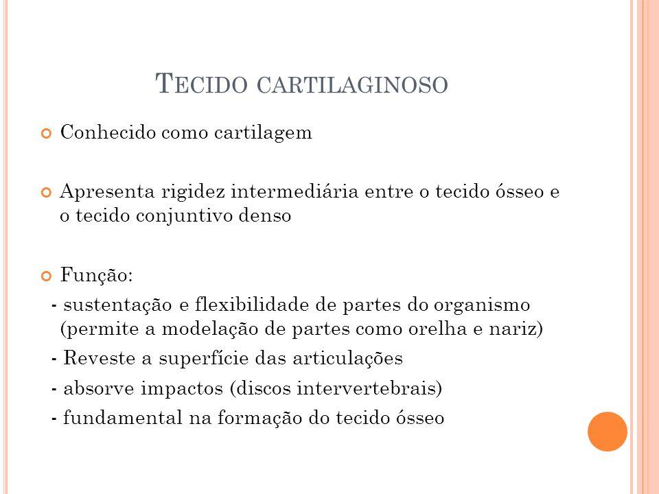 T ECIDO CARTILAGINOSO Conhecido como cartilagem Apresenta rigidez intermediária entre o tecido ósseo e o tecido conjuntivo denso Função: - sustentação