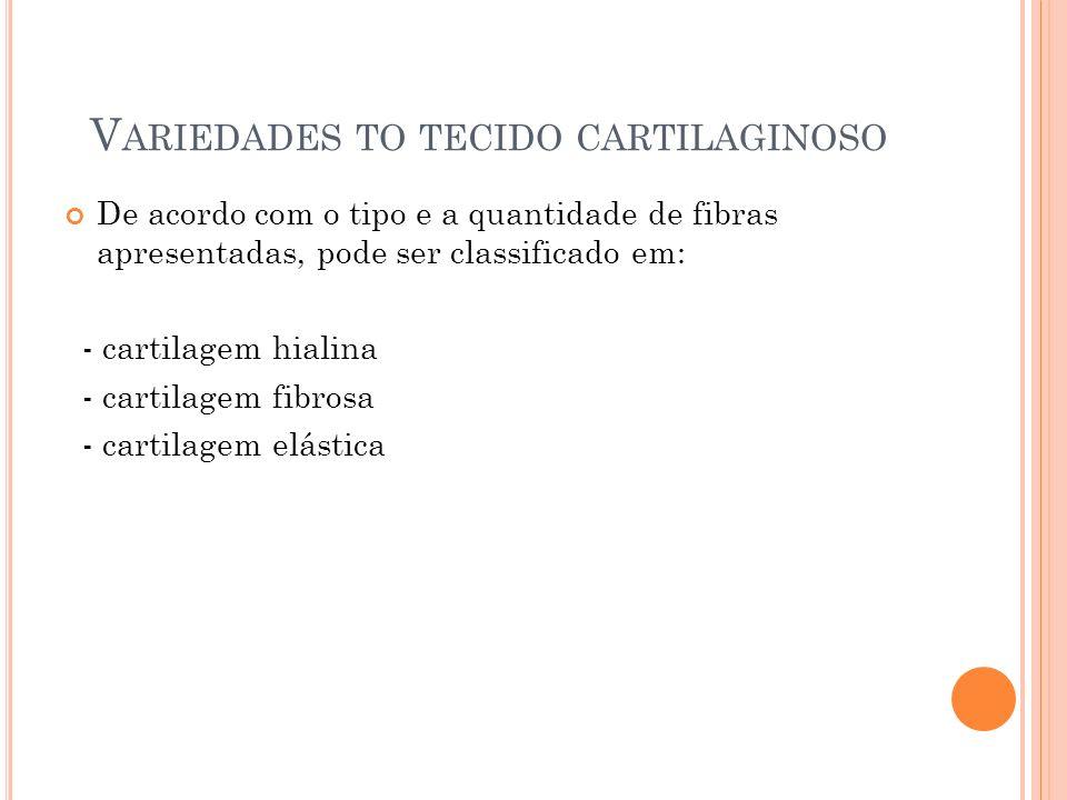 V ARIEDADES TO TECIDO CARTILAGINOSO De acordo com o tipo e a quantidade de fibras apresentadas, pode ser classificado em: - cartilagem hialina - carti