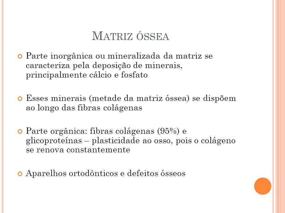 M ATRIZ ÓSSEA Parte inorgânica ou mineralizada da matriz se caracteriza pela deposição de minerais, principalmente cálcio e fosfato Esses minerais (me