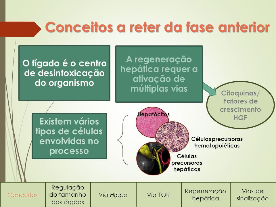 Citoquinas/ Fatores de crescimento HGF Conceitos a reter da fase anterior Conceitos Regulação do tamanho dos órgãos Via HippoVia TOR Regeneração hepát