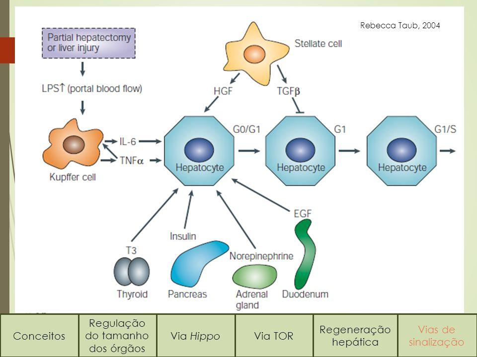 Conceitos Regulação do tamanho dos órgãos Via HippoVia TOR Regeneração hepática Vias de sinalização