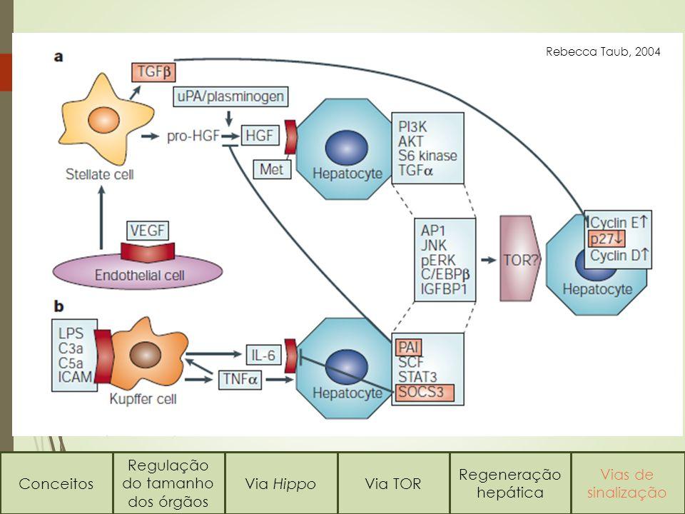 Rebecca Taub, 2004 Conceitos Regulação do tamanho dos órgãos Via HippoVia TOR Regeneração hepática Vias de sinalização