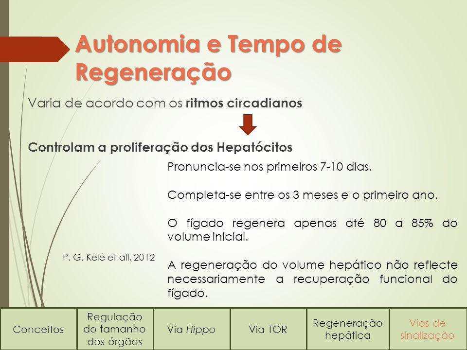 Varia de acordo com os ritmos circadianos Controlam a proliferação dos Hepatócitos Autonomia e Tempo de Regeneração Pronuncia-se nos primeiros 7-10 dias.