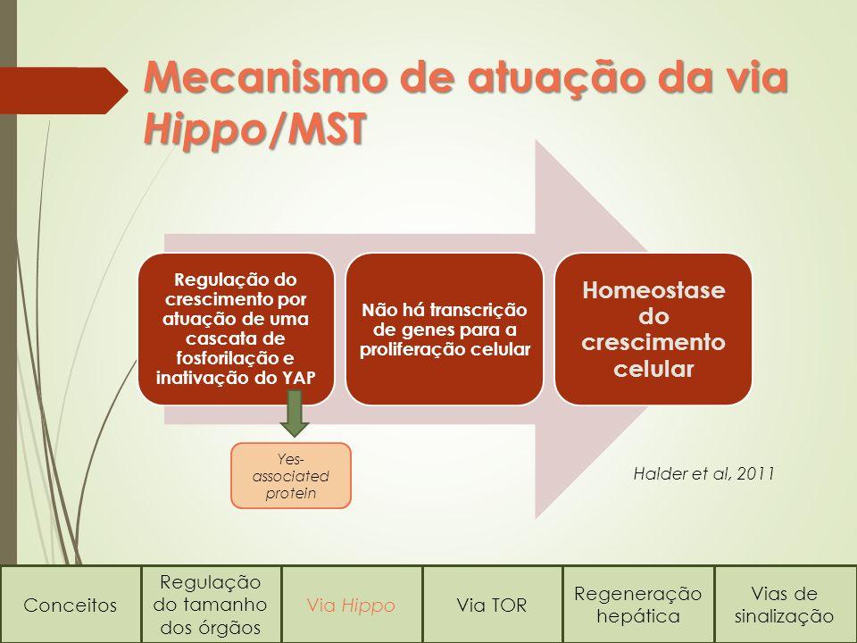 Conceitos Regulação do tamanho dos órgãos Via HippoVia TOR Regeneração hepática Vias de sinalização Mecanismo de atuação da via Hippo /MST Regulação d